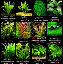 types of aquarium image result for amazon aquarium fish aquarium and cabinet