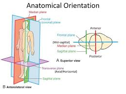 5 college application topics about anatomical directional terms