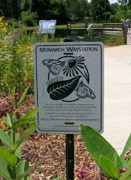 native plant society of texas monarch butterfly rest areas coming to texas highways news
