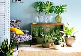 home decor with plants plant home decor plants living room corner flower cotton tradesman