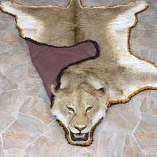 lion heads for sale lion rug mount 12331 the taxidermy store
