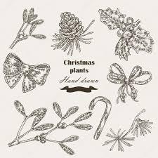 hand drawn christmas plants mistletoe and holly christmas design