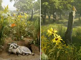 21 best k grasslands images on pinterest animal habitats