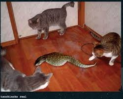 Yes Meme Picture - tsuchinoko real meme people want to believe in it