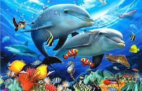 oceans life animals beneath attractions four seasons underwater