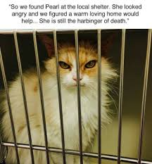 Angry Meme Cat - this angry cat was rescued and the internet turned her into a gas meme