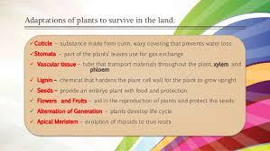 plant evolution extinction and hybridization