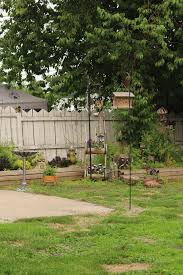 backyard bird feeder free stock photo public domain pictures