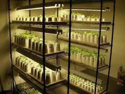 best grow lights for vegetables 19 best grow lights for veggies images on pinterest hydroponics