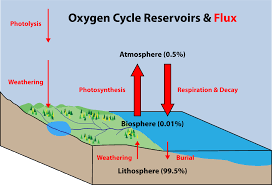 oxygen cycle wikipedia