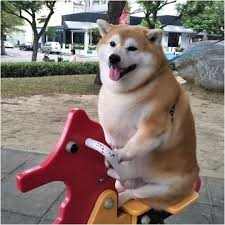 Chubby Meme - what is the doge meme new photographs 㠪ムムã hello there