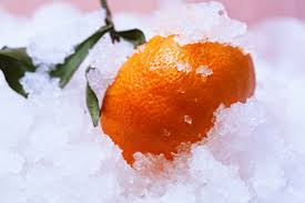 geothermally heated greenhouse in nebraska produces fresh citrus