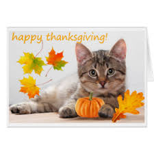 thanksgiving cat greeting cards zazzle
