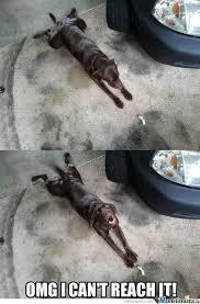 Lazy Meme - lazy dogs by willk49 meme center