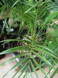 nasa u0027s list of the best air filtering houseplants good