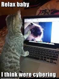 Cat Laptop Meme - relax baby lolcats lol cat memes funny cats funny cat