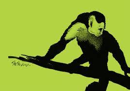 capuchin monkey newsdesk