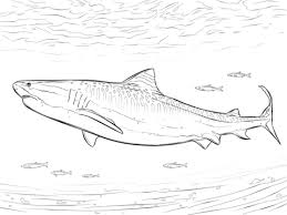 realistic tiger shark coloring free printable coloring pages