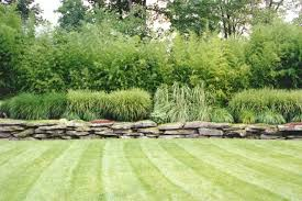 ornamental grass bamboo and fern gardens hickory hollow landscapers