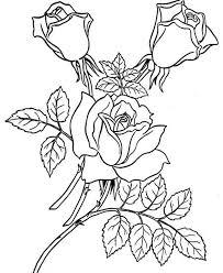 garden rose coloring download u0026 print coloring