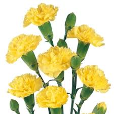 carnation flowers mini carnation flowers