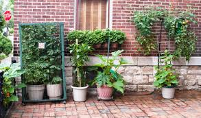 4 diy container garden ideas for spring mesa awning