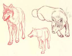 10 best wolf images on pinterest wolf sketch wolves and a wolf