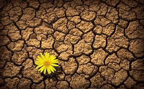 yellow daisy wallpapers flowers yellow beauty beautiful desert flower nature daisy