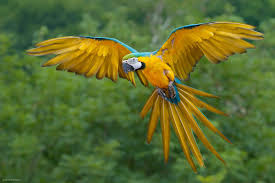 the artful maven haven on the wings of a parrot