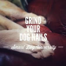 dog nail trims part 5 how to trim your dog u0027s nails with the