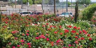 Botanical Gardens El Paso City S Garden Set To Reopen March 1st El Paso Herald Post