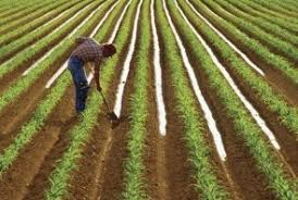 furrow irrigation for vegetable garden world agriculture