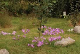 Scottish Rock Garden Forum by September 2017 Sorta Like Suburbia