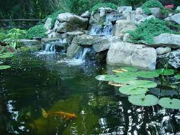 keeping pond fish safe and healthy in winter