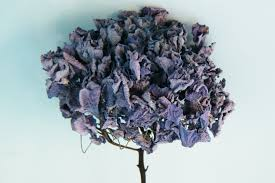 dried hydrangeas drying hydrangea flowers dried flower crafts
