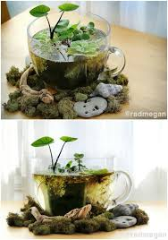 Mini Water Garden Ideas 20 Charming And Cheap Mini Water Garden Ideas For Your Home And
