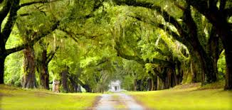 Plantation Bed And Breakfast Welcome To Mansfield Plantation Georgetown South Carolina Bed And