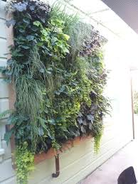 21 best indoor plants indoor plants vertical wall vertical plant