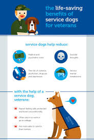 service dogs helping those who served our country