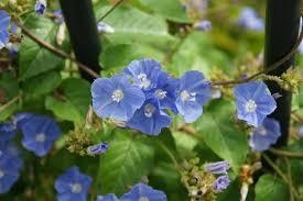 native plants of south florida fairchild tropical botanic garden u003e horticulture u003e fairchild plant