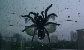 Big Ass Spider Fimfiction - let s open a window for some fresh air nope wtf