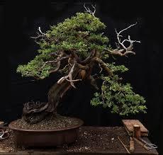pot bonsai design blog u2014 bonsai shinsei new york