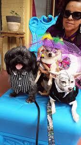 affenpinscher texas texas dogs and cats san antonio home facebook
