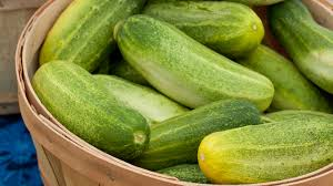 what to do about bitter cucumbers organic gardening blog
