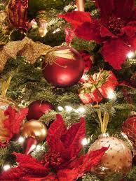en iyi 17 fikir balsam fir christmas tree pinterest u0027te