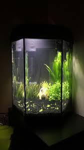halloween fish tank background 11 best fish tank ideas images on pinterest fish tanks ornament