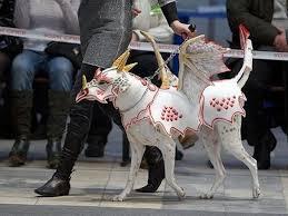 diy dog halloween costume bad pet costumes real animal cruelty