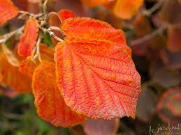 the pumpkin color palette