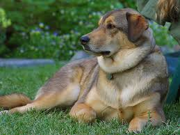 Types Of Dogs Dog Training Archive Obedience Training