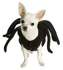 Spider Dog Halloween Costume Halloween Safety Dog